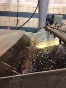 Olivenwäsche